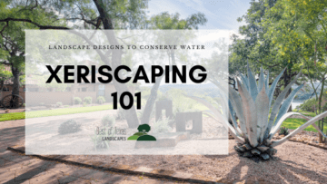 Xeriscaping 101 with Best of Texas Landscapes