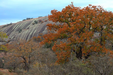 Fall leaves in Texas at Enchanted Rock